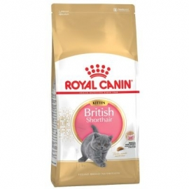 Royal Canin Kitten British Shorthair kassitoit 10kg