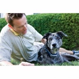 PetSafe 900 m treeningpult suurele koerale